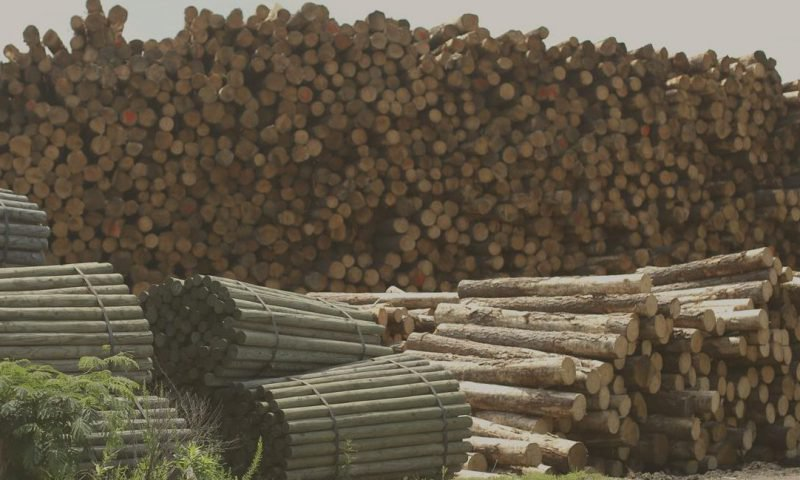 Increasing Lumber Prices and Your Insurance