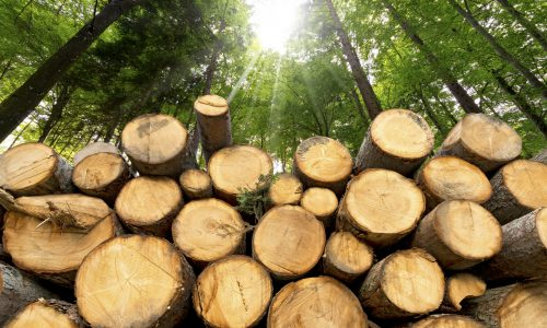 Responsible Forest Management: Setting the Stage for Healthy Trees
